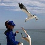 Feeding the Pelicans