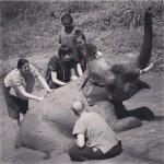 Foto de Ran-Tong (Save and Rescue Elephant Centre)
