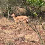 Photo de Zululand Tree Lodge