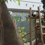 New Born baby Panda