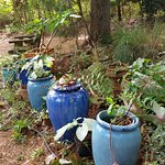 Pots of plants all throughout grounds