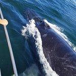 40 foot Humpback...Curious George