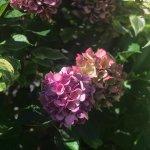 Photo of Bellevue Botanical Garden