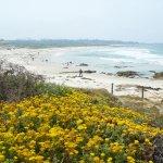 Photo of Asilomar State Beach