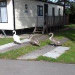 Ducks roaming Lakeside