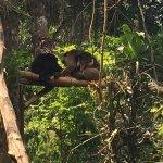 Fotos del recorrido por la selva visitando distintos tipos de jaulas de los animales Algunos en