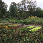 Awesome organic garden