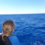 Photo de Ultimate Whale Watch & Snorkel