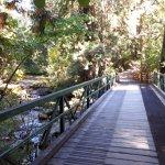 Bridge on North Loop trail