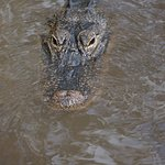 Photo of Gator Park
