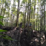 Secret Single Track (Infinity MTB Tours), national forrest Bali