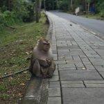 Photo of Monkey Hill