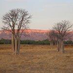 Cockburn Ranges and beautiful Boabs - just love the East Kimberley!
