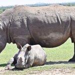 Photo de Porini Rhino Camp