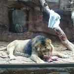 Foto de Nuremberg Zoo