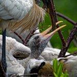 birds of Wakodahatchee