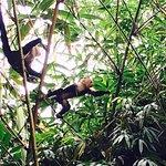 monkeys came to visit us