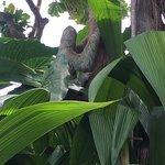 Sloth came to visit us Casa de Frutas