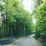 On our drive to Lake Oswego...It was truly beautiful, green and lush.
