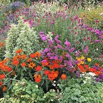 Lovely mixed flower gardens