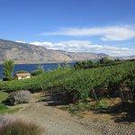 Vineyards, lake & mountain views.