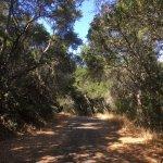 Pulgas Ridge Preserve