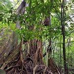 tree in the Rincon de la Vieja National park