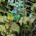 Rare blue flowers!