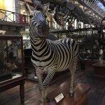 Irisches Nationalmuseum – Naturhistorische Abteilung Foto