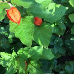 Foto de Botanical Garden (Botanischer Garten)