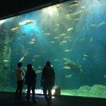 Photo of Salmon Hometown Chitose Aquarium