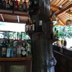 Not often you see a tree at the bar...