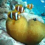 Reef Magic Cruises Foto