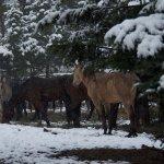Hoses waiting to saddle up.