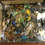Display case in lobby; birds