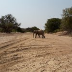 Photo of Wilderness Safaris Doro Nawas Camp