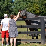 So many beautiful horses to admire and pet, again at the McPeek Farm