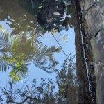La tortuga que les decia, y el estanque horrible, sucio y pequeño que esta.