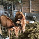 Photo of Agriturismo La Fuga