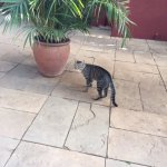 A resident cat in part of the outside area of the restaurant.