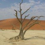 Photo de Wilderness Safaris Kulala Desert Lodge