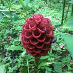 A flower comes out of each honeycomb