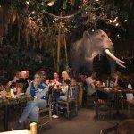 Foto de Rainforest Café