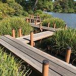 Nice bridgework in the Japanese garden