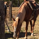 This is Oscar - the horse my daughter rode.