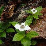 Purden Lake forest flowers