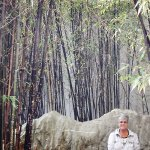 bamboo surrounded sitting rock