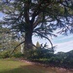 magnifique branche