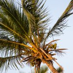 Foto de Southern Sun Maputo