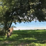 Photo of L'Orto delle Fate